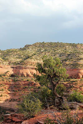 Photograph - Tree Colorado National Monument by Mary Bedy