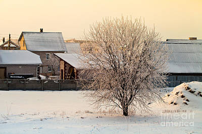 Photograph - Tree Covered With Frost by Sviatlana Kandybovich
