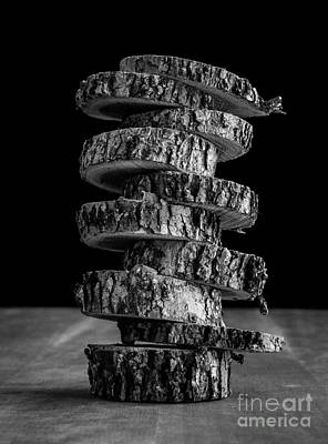 Still Life Photograph - Tree Deconstructed by Edward Fielding