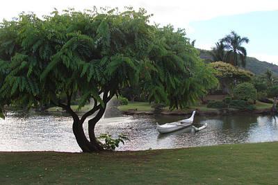 Photograph - Tree by Dee  Savage