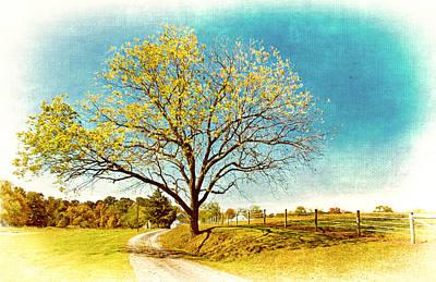 Photograph - Tree Down The Lane by Carolyn Derstine