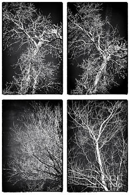 Photograph - Tree Family by John Rizzuto