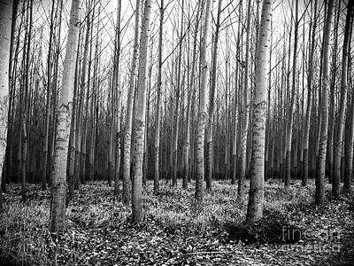 Photograph - Tree Farm by Chalet Roome-Rigdon
