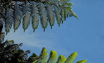 Photograph - Tree Fern Abstract by Peter Mooyman