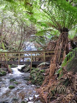 Pop Art - Tree fern and foot bridge  by BJZ Photographs