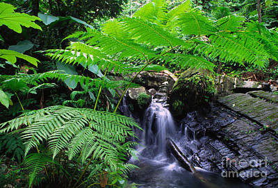Tree Fern And Waterfall Art Print