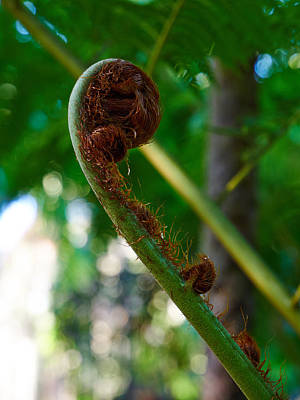 Photograph - Tree Fern by Jouko Lehto