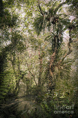 Photograph - Tree Ferns by Alexander Kunz