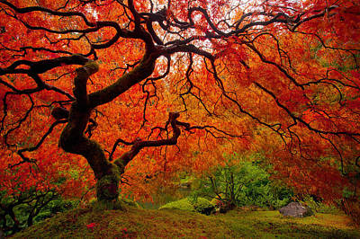 Red Photograph - Tree Fire by Darren  White