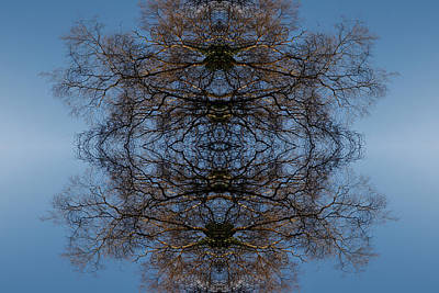 Digital Art - Tree Flip 6 by Steve Ball