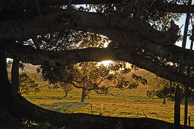 Photograph - Tree Framed Landscape by Ankya Klay