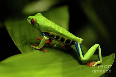 Tree Frog 12 Art Print by Bob Christopher