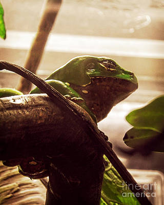 Photograph - Tree Frog by Emily Kelley