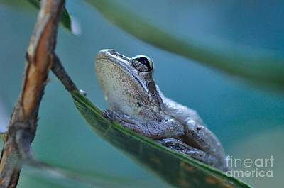 Guava Tree Photograph - Tree Frog Gray Looks Up Into Blue by Wayne Nielsen