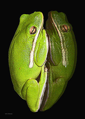 Photograph - Tree Frog Reflection by Lucy VanSwearingen