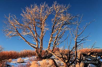 Photograph - Tree Glow by Adam Jewell