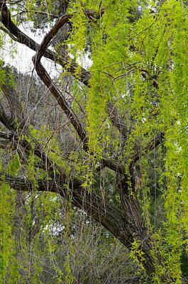 Tree Green Art Print