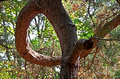 Que Photograph - Tree Growing In A Loop by Valerie Garner