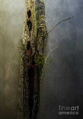 Photograph - Tree House by Jean OKeeffe Macro Abundance Art