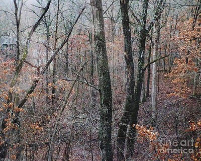 Photograph - Tree House Mountain View Bella Vista Ar by Lizi Beard-Ward