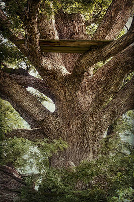 Photograph - Tree House by Wayne Meyer
