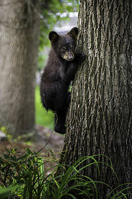 Photograph - Tree Hugger by Sara Hudock