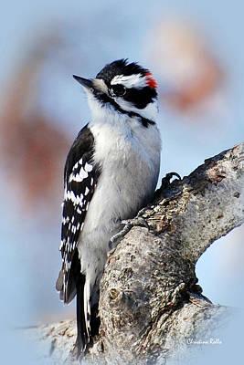 Downy Woodpecker Photograph - Tree Huggin' Nut Lover by Christina Rollo