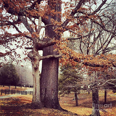 Photograph - Tree Hugging by Kerri Farley