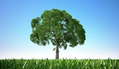 Tree In A Field, Artwork Art Print by Leonello Calvetti