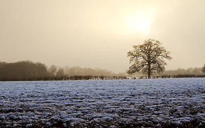 Tree In A Field On A Snowy Day Art Print by Fizzy Image