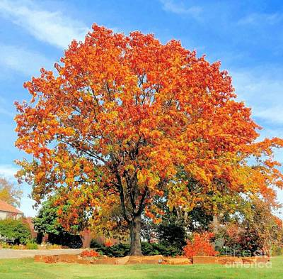 Photograph - Tree In Autumn by Janette Boyd