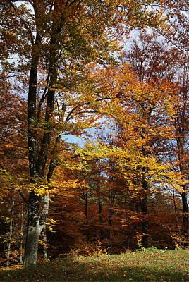 Photograph - Tree In Autumn Light by Bogdan M Nicolae