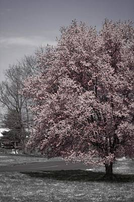 Selective Color Photograph - Tree In Bloom by Tom Gari Gallery-Three-Photography