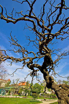 Wild And Wacky Portraits - Tree in Botanical garden in Zagreb by Brch Photography