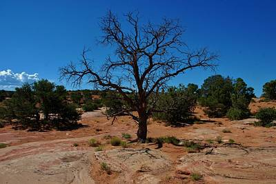 Photograph - Tree In Canyon De Chelly by Dany Lison