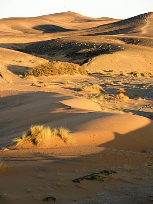 Tree In Desert, Erg Chebbi, Morocco Art Print