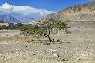 Photograph - Tree In Desert by Patricia Hofmeester