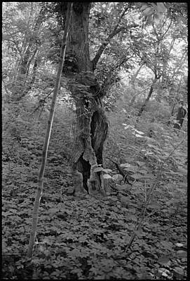 Black And White Photograph - Tree In Elkins Park by Julie VanDore