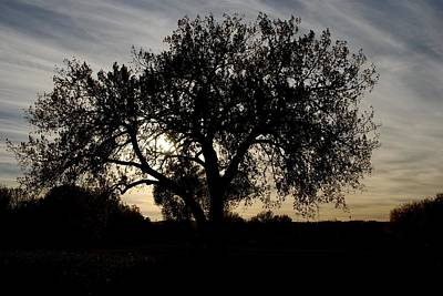 Photograph - Tree In Evening Silhouette by Dakota Light Photography By Dakota