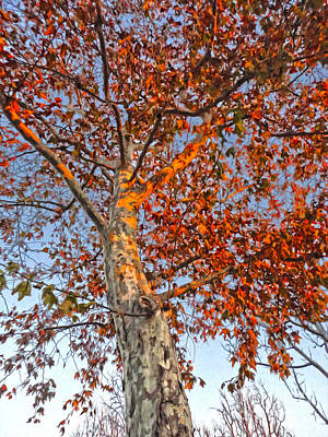 Photograph - Tree In Fall by Gregory Dyer