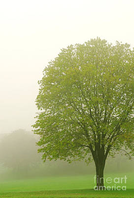 Tree In Fog Art Print by Elena Elisseeva