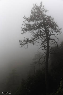 Photograph - Tree In Fog by Fran Gallogly