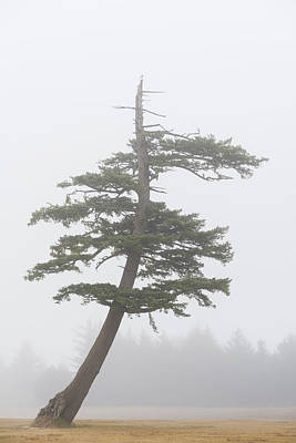 Photograph - Tree In Fog by John Shaw