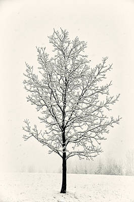 Tree In Heavy Snow Art Print by Joseph Duba