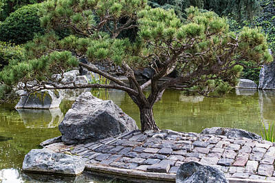 Photograph - Tree In Japanese Garden by Suzanne Luft