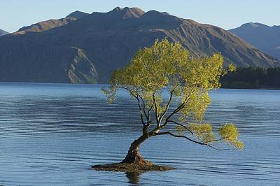 Tree In Lake Wanaka Art Print by Stuart Litoff