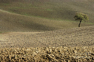 Tree In Landscape Val D'orcia Tuscany Italy Print by Robert Leon