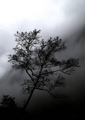 Photograph - Tree In Mist by Tyler Lucas