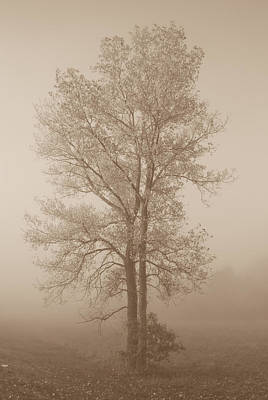 Tree In Morning Fog Print by Eje Gustafsson