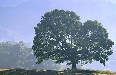 Photograph - Tree In Morning Light by Byron Jorjorian